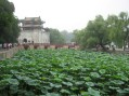 Lotus ponds at the Summer Palace